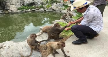 Ba Ho waterfall & Monkey island tour